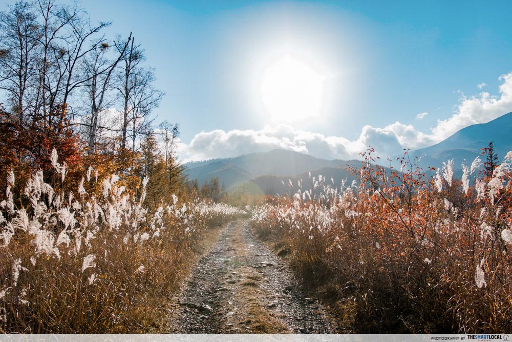 Nagano kamokochi matsumoto guide - norikura lalang field