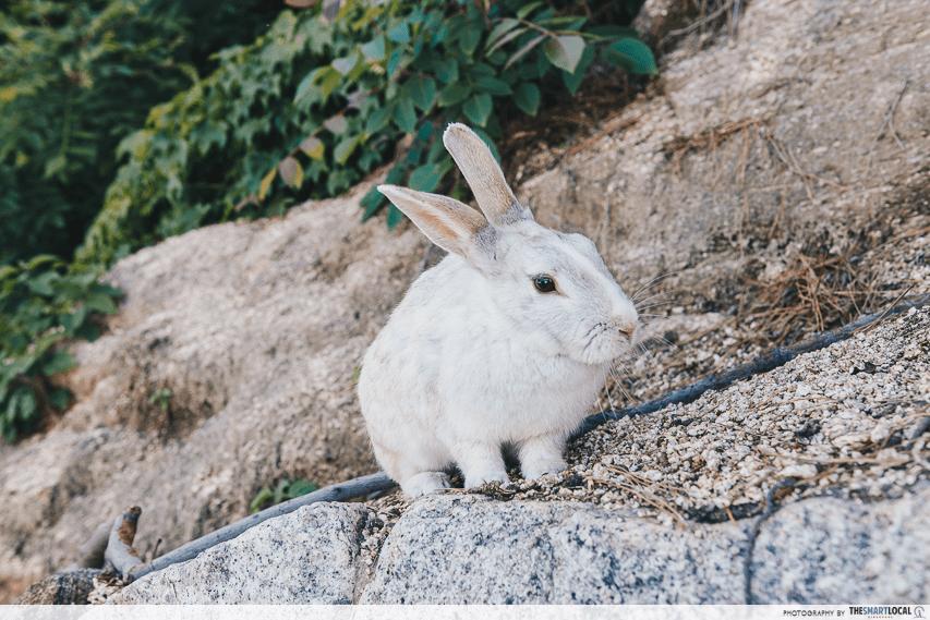 rabbit island Hiroshima