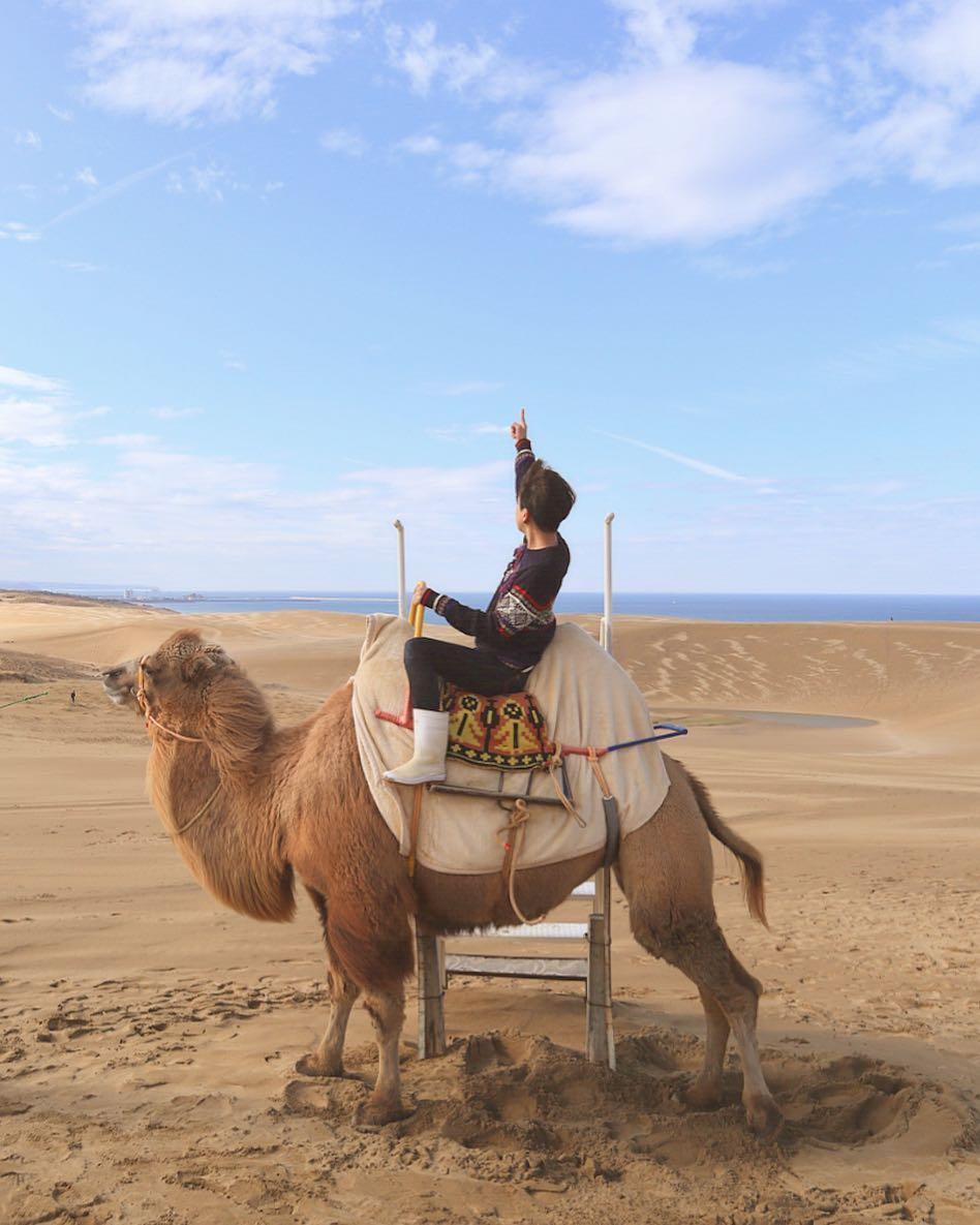 japan tottori sand dunes camel ride