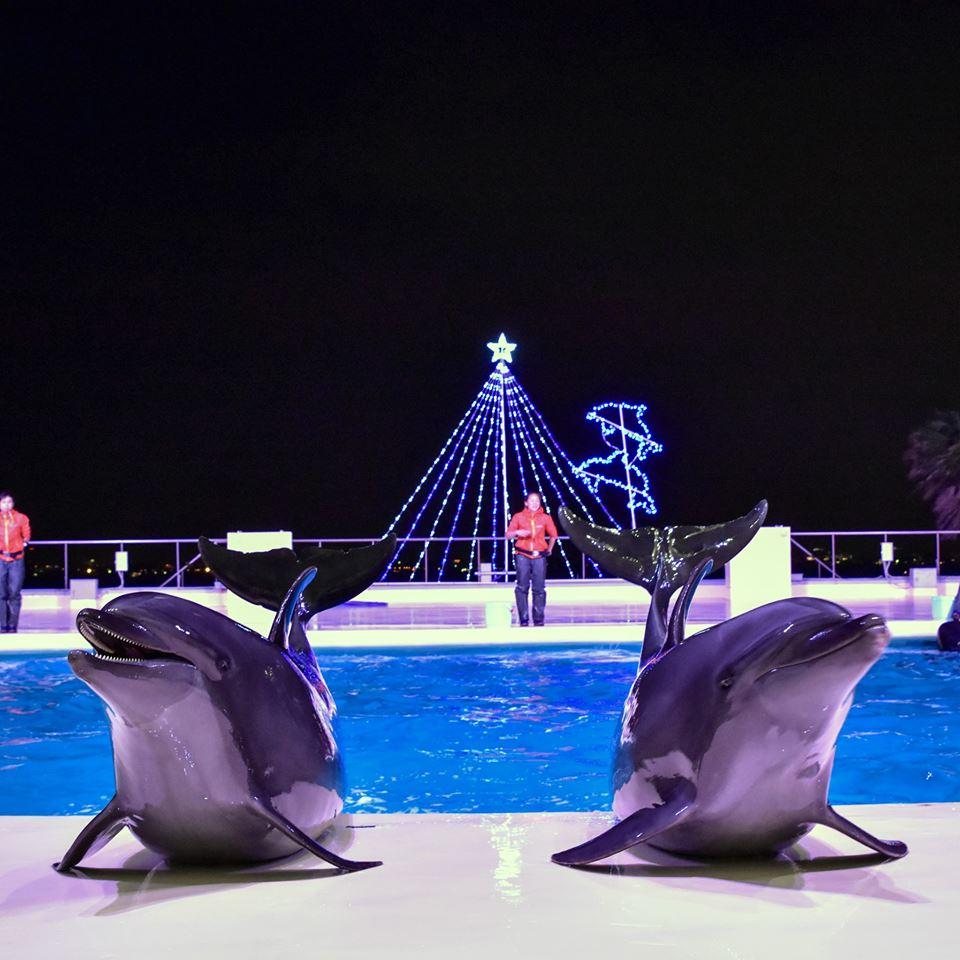 uminonakamichi seaside park marine world dolphin and sea lion show