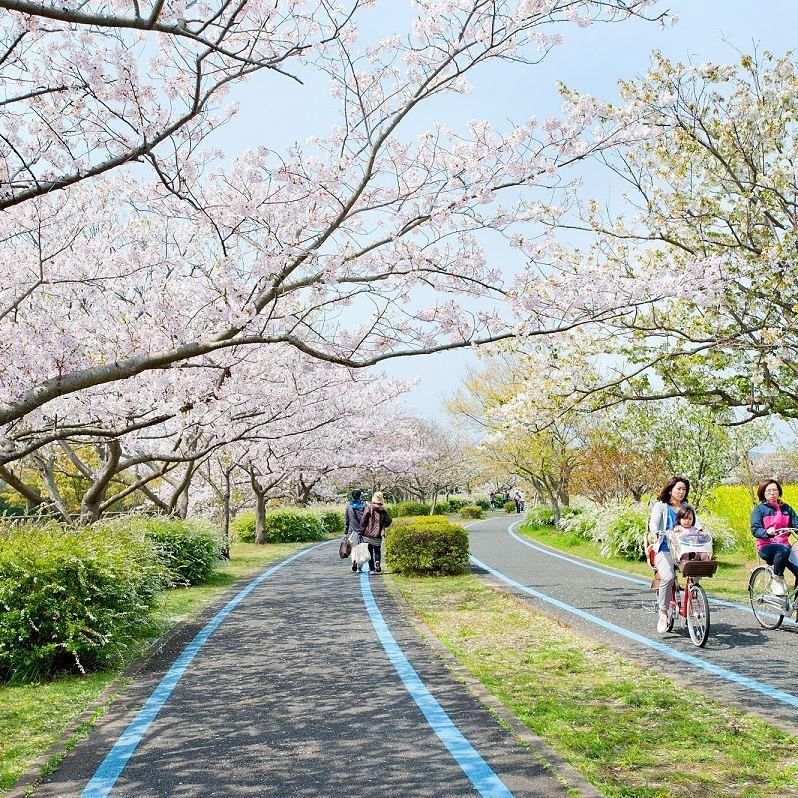 uminonakamichi seaside park cherry blossom seasonal flowers