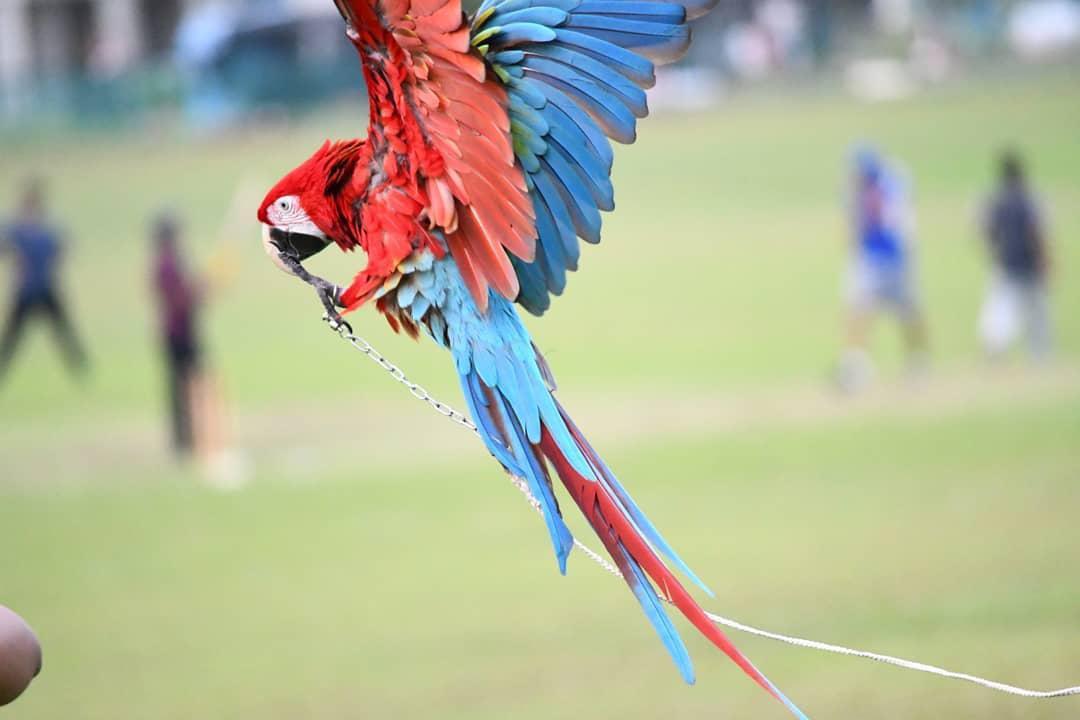 pet expo parrot