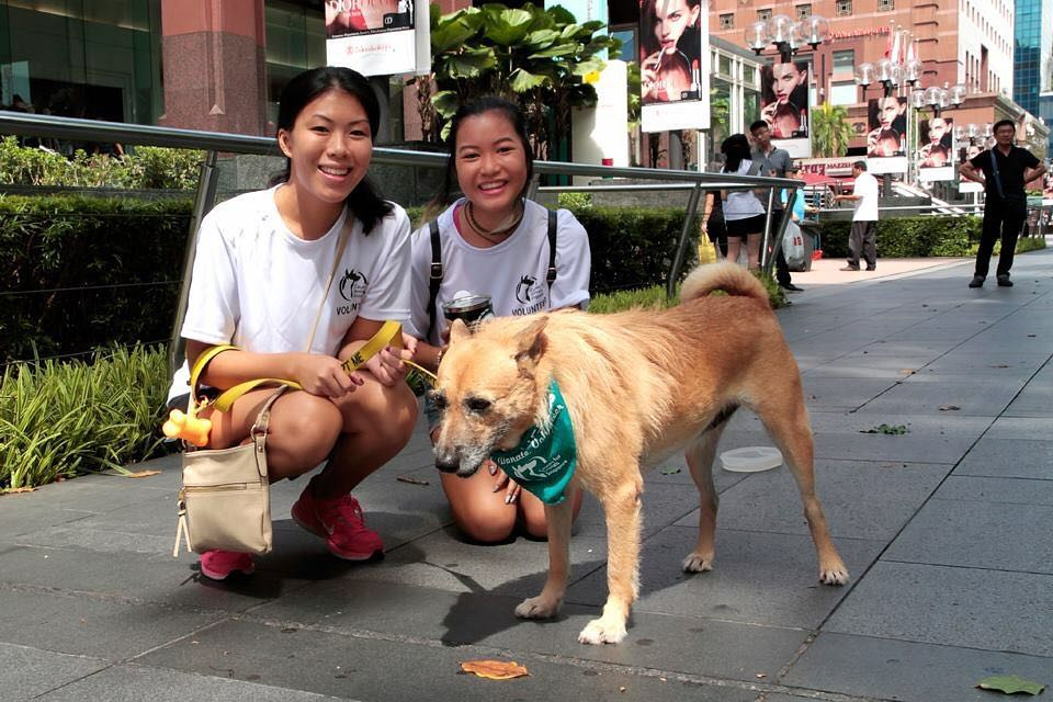 volunteering with animal shelter singapore dogs cats rabbit causes for animals