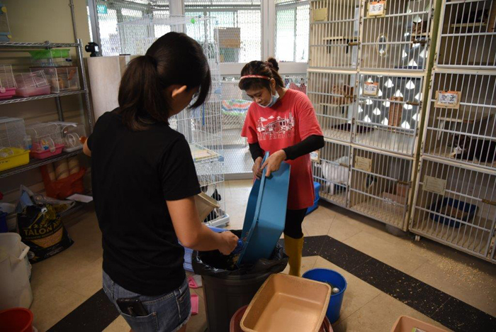 volunteering with animal shelter singapore dogs cats rabbit spca
