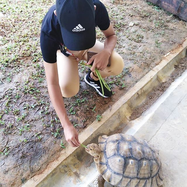 volunteering with animal shelter singapore dogs cats rabbit live turtles and tortoise museum