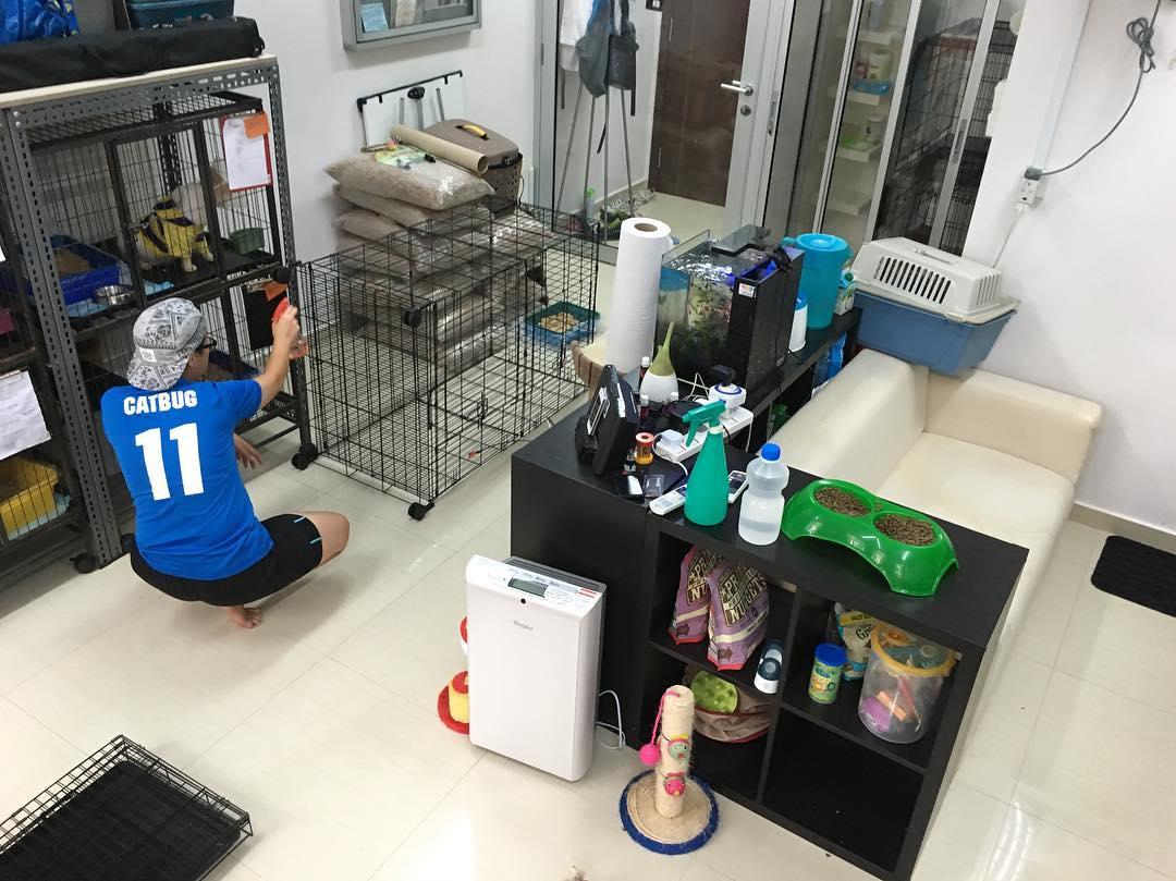 volunteering with animal shelter singapore dogs cats rabbit love kuching shelter