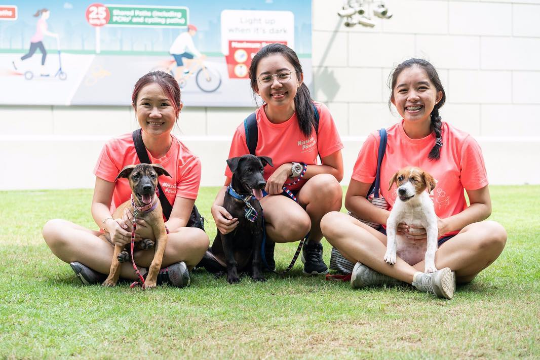 volunteering with animal shelter singapore dogs cats rabbit save our street dogs