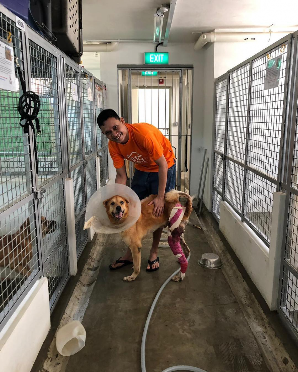 volunteering with animal shelter singapore dogs cats rabbit save our street dogs shelter
