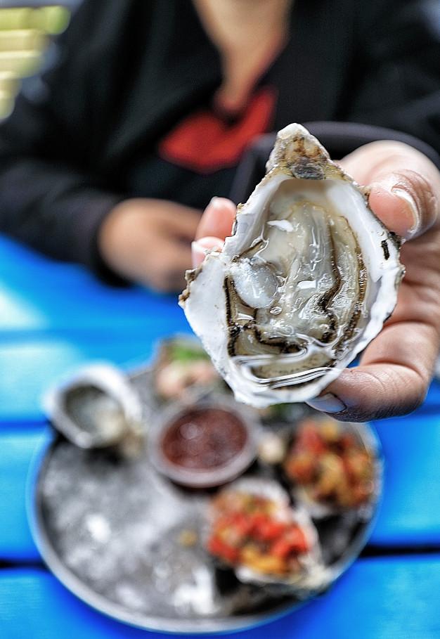Oysters at Freycinet Marine Farm