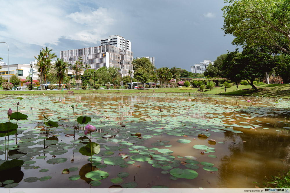 Ang Mo Kio Town Garden West lotus pond