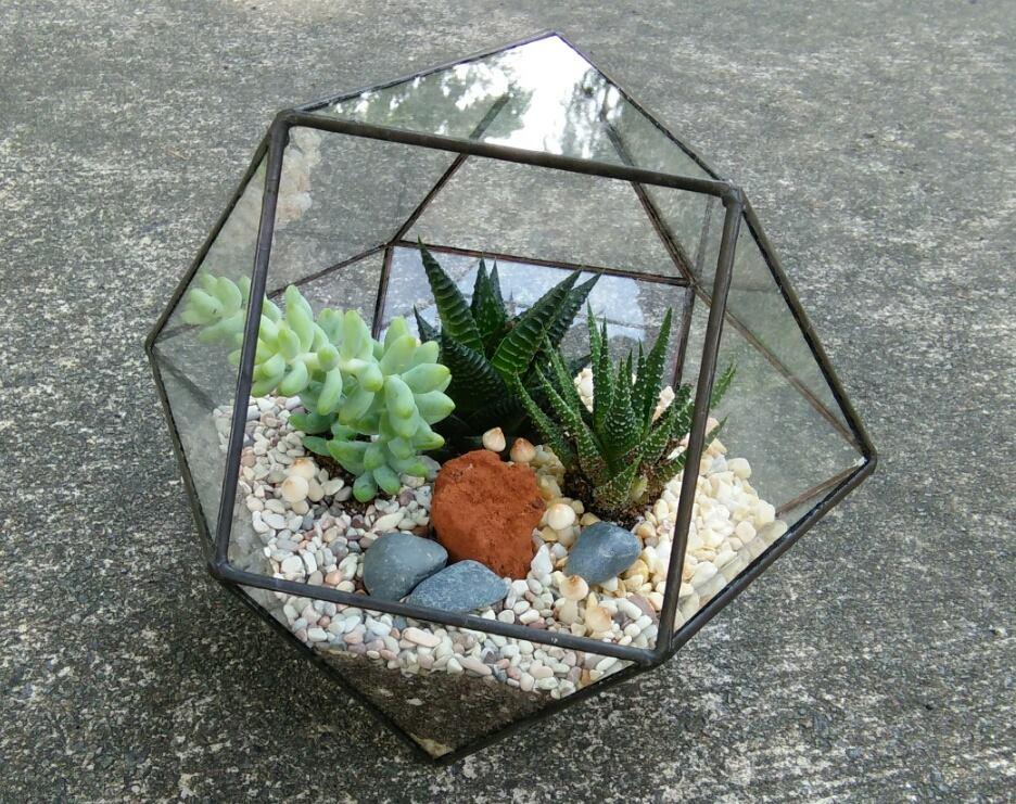 Ecoponics, family-friendly terrarium classes