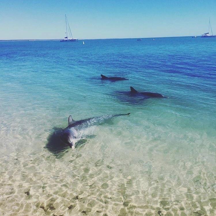 Monkey Mia - dolphins