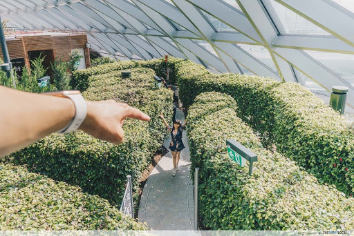 Jewel Changi Hedge Maze