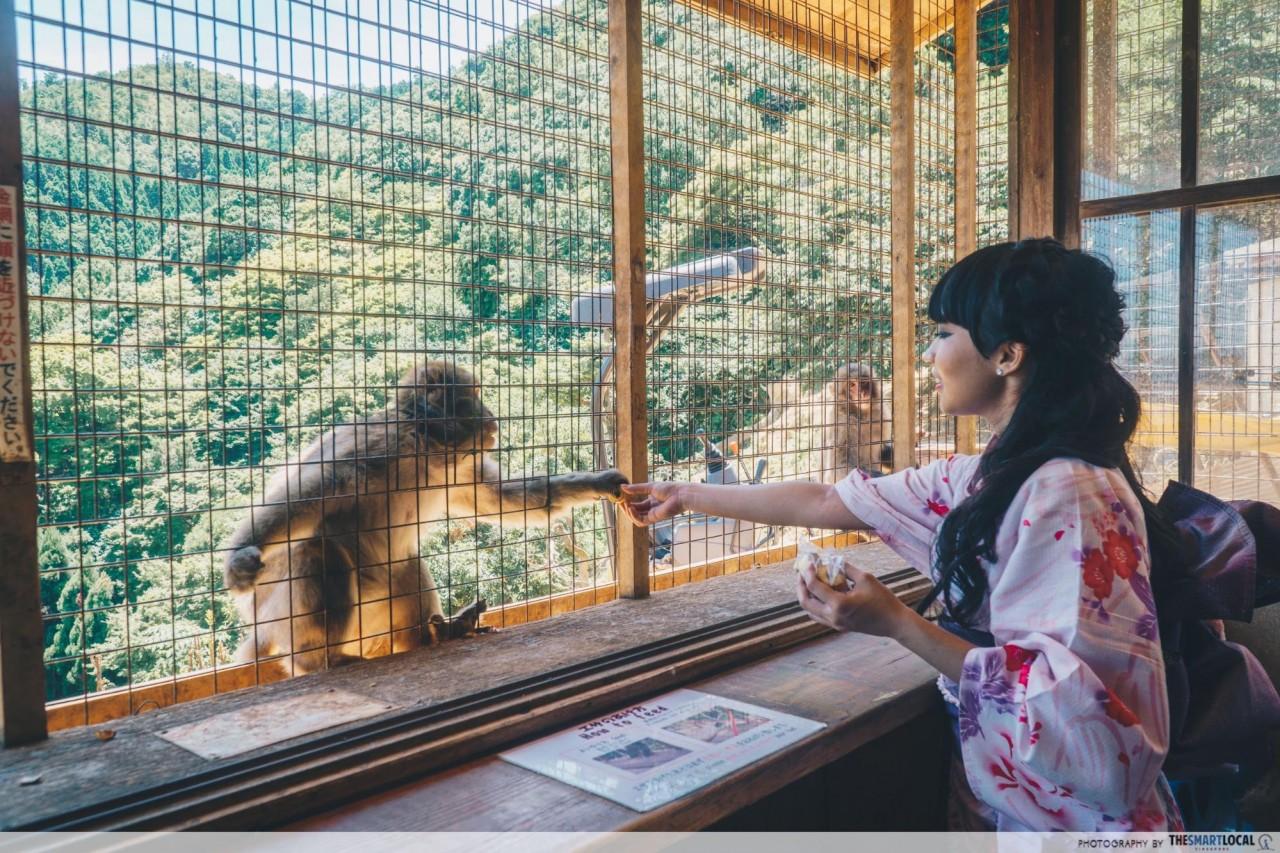Iwatayama Monkey Park Arashiyama
