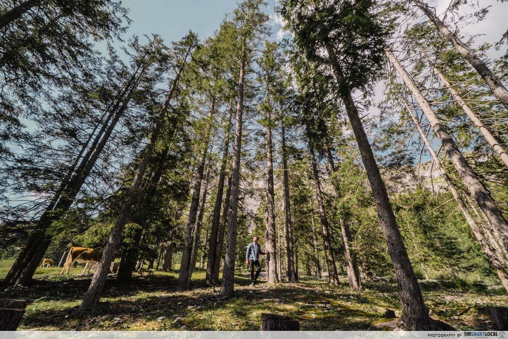 Forest in Oeschinensee Switzerland