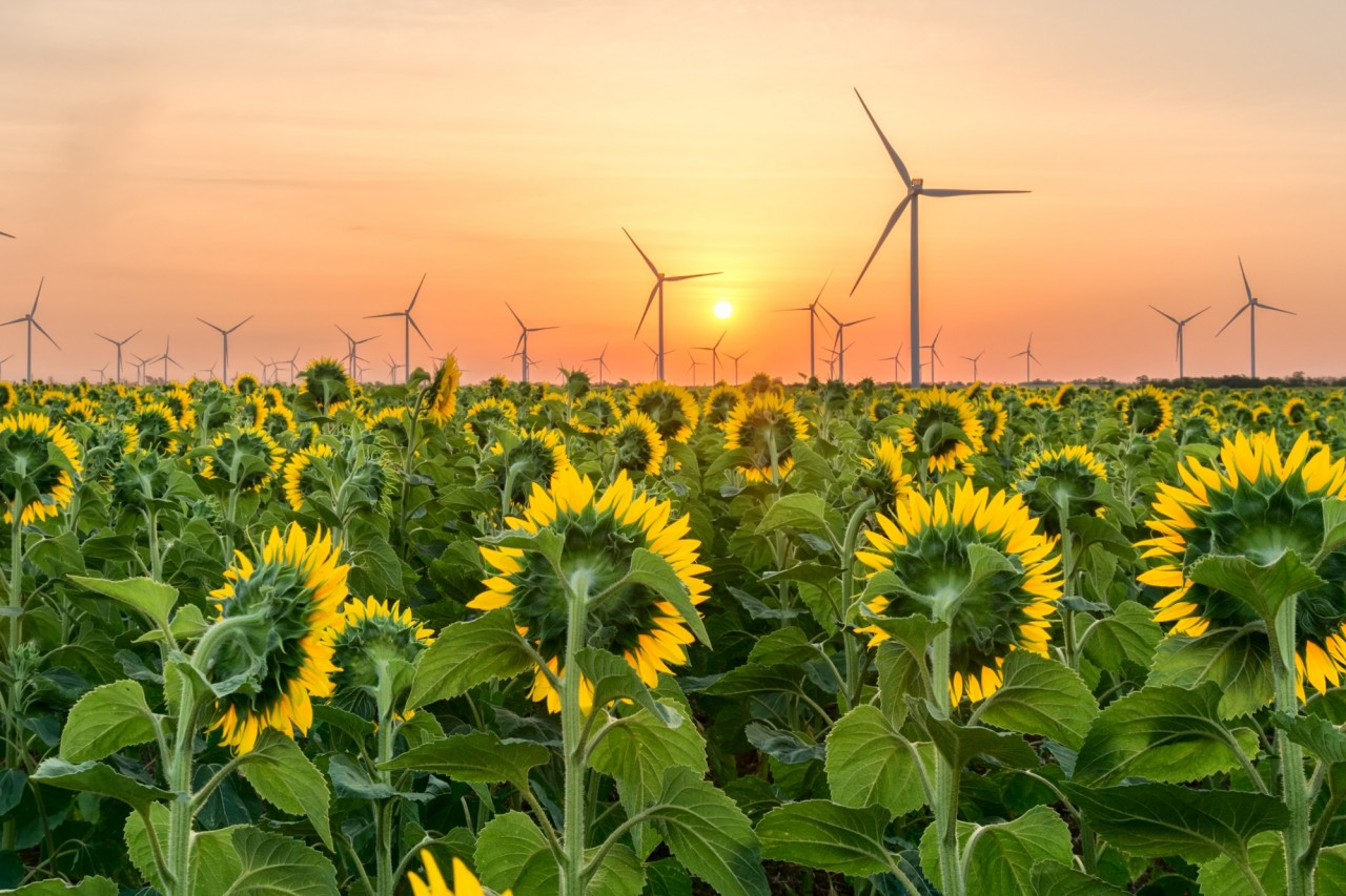 Olam photography competition - wind turbines