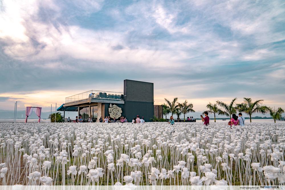 10,000 roses sunset