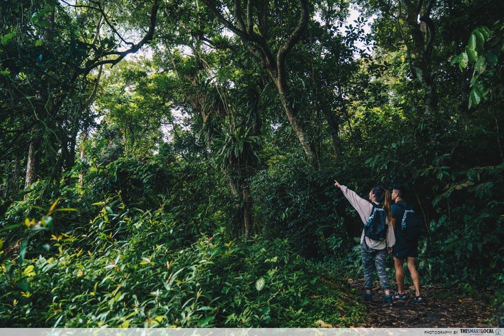 kampong trail foliage