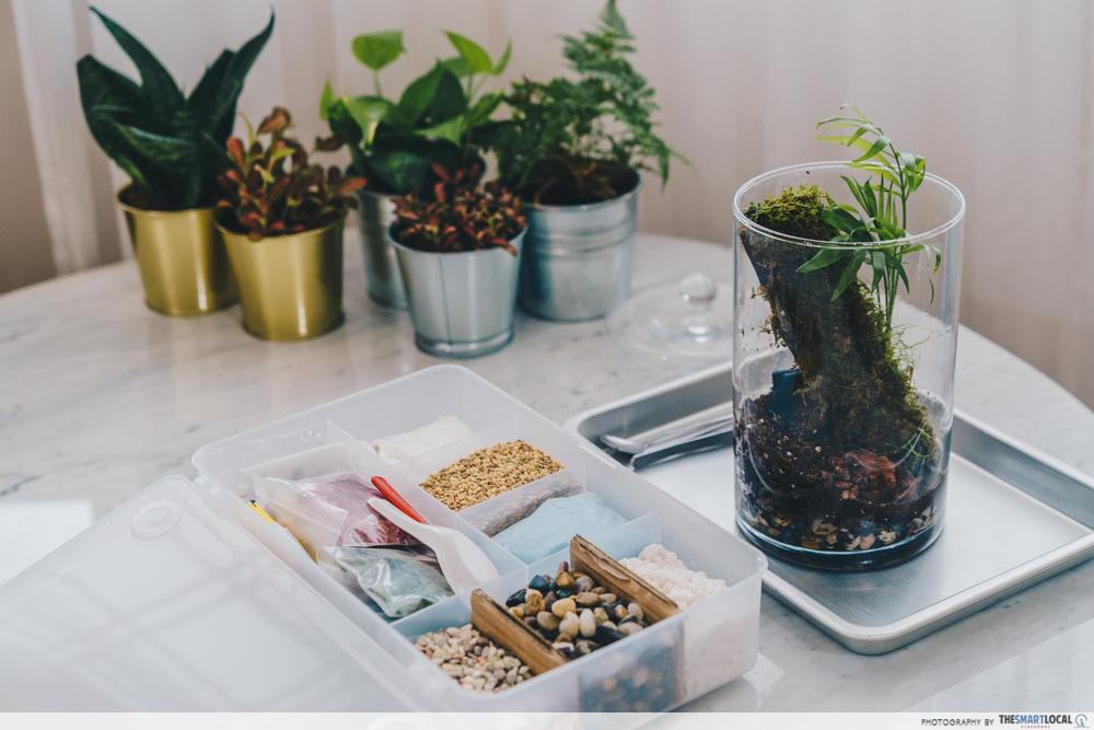 vera's garden terrarium