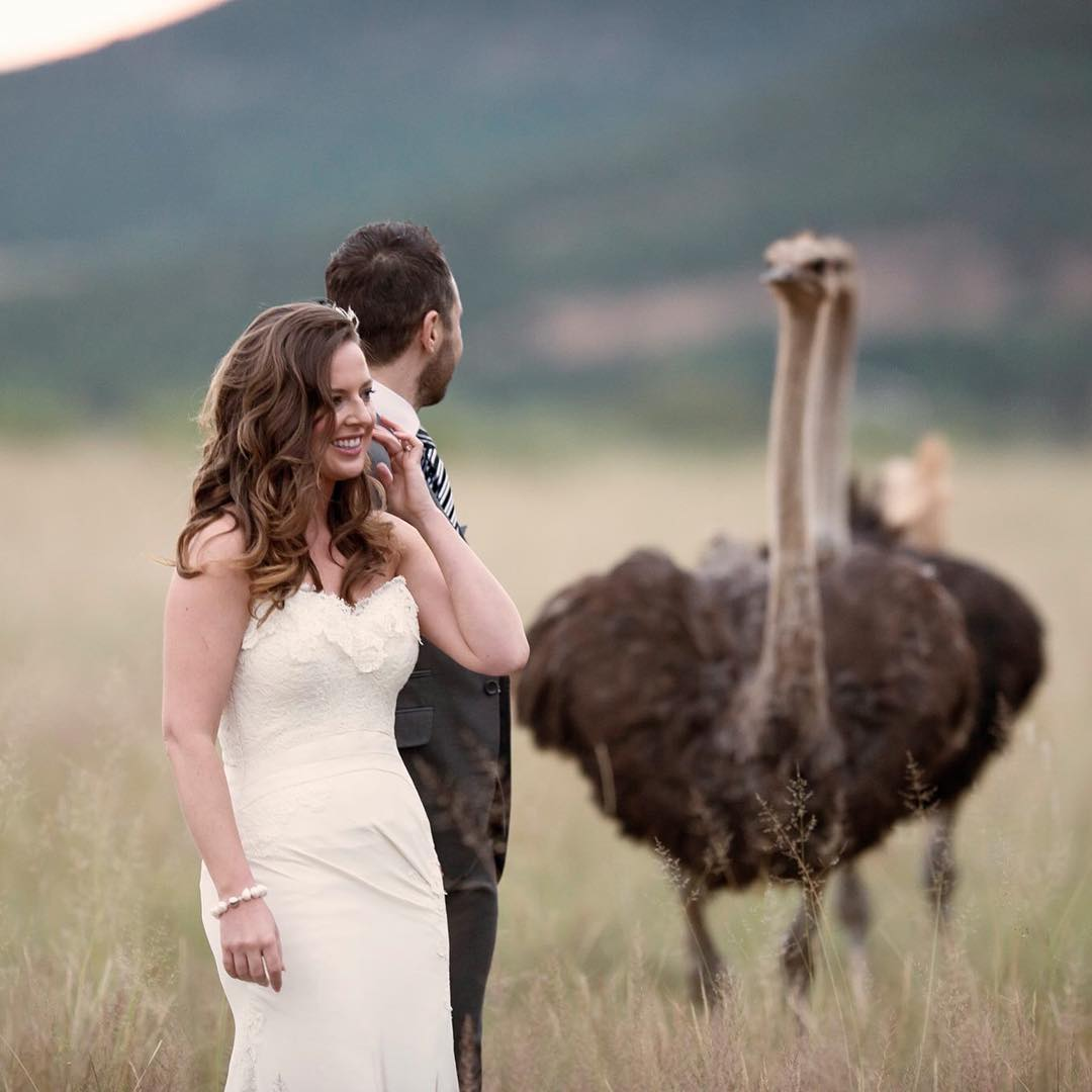 savannah wedding shoot with ostriches