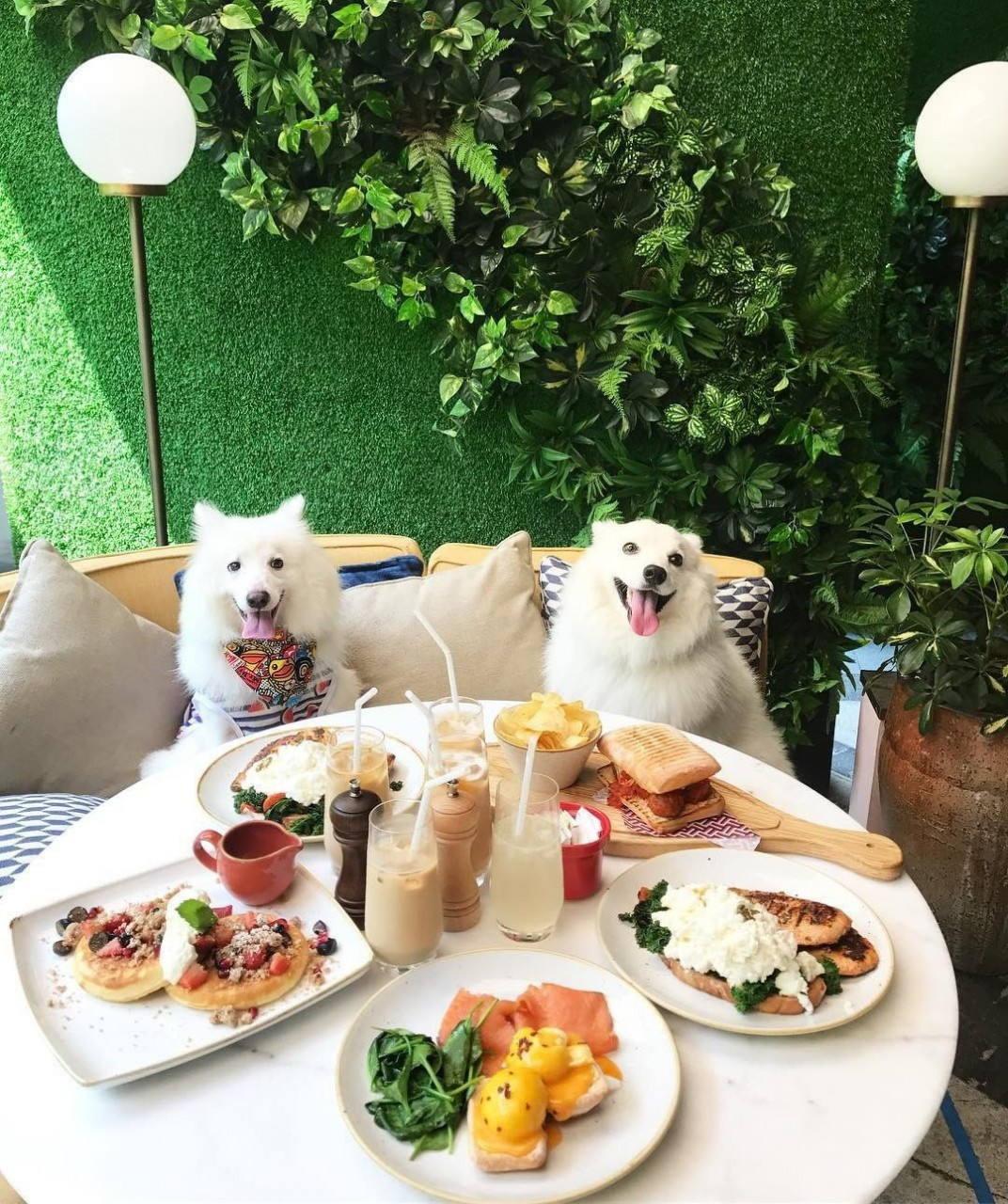 dog friendly cafe singapore