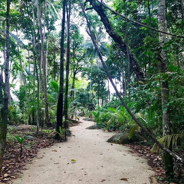 nikoi island forest