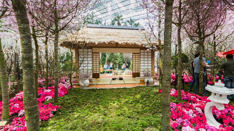 sakura matsuri gardens by the bay cherry blossom things to do march