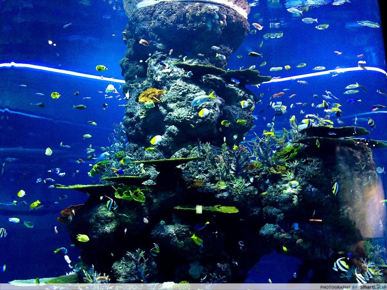 s.e.a. aquarium sentosa
