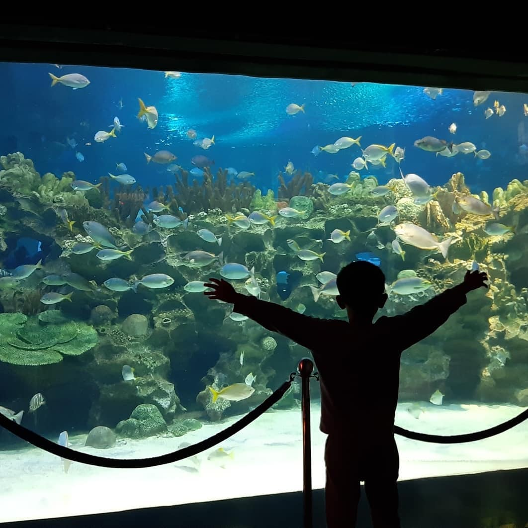 Kid posing at aquarium at Aquaria KLCC
