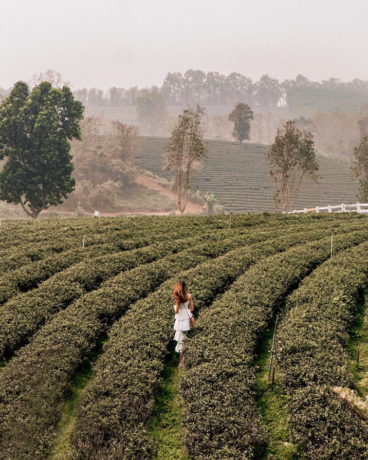 chui fong tea plantation matcha green tea chiang rai thailand airasia instagrammable