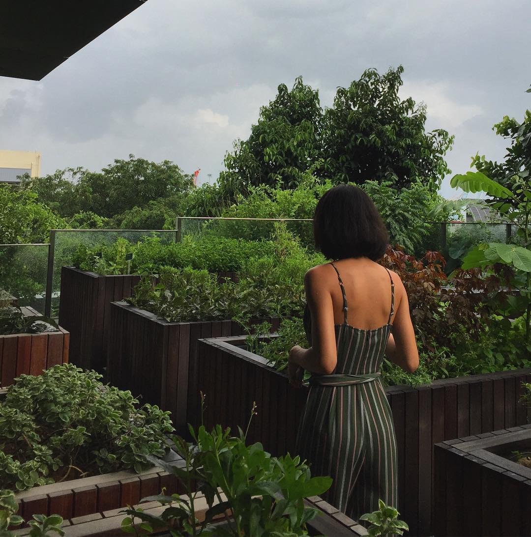 hrvst bsitro garden