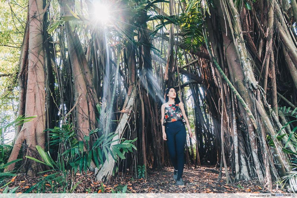 haunted jungle