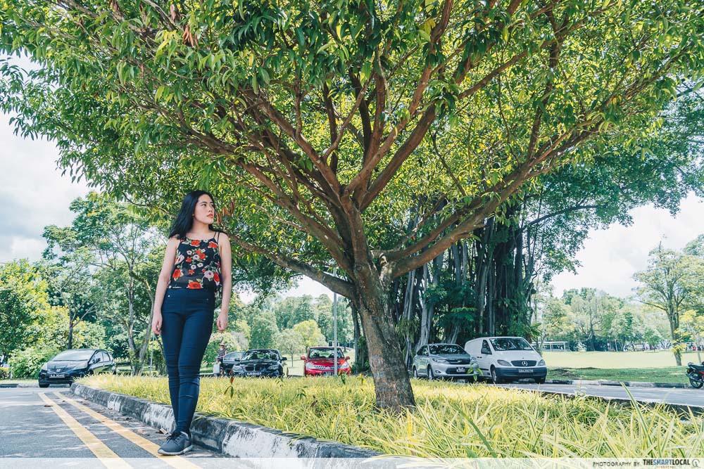 Sembawang tree