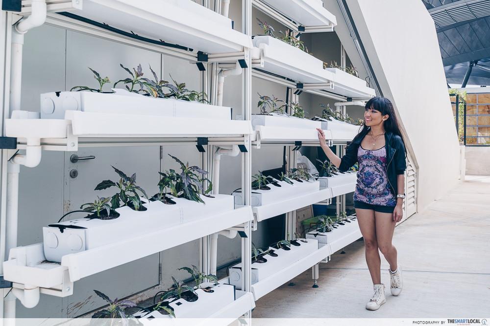 Urban farm Funan