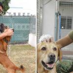 SAF Dog Adoption Drive