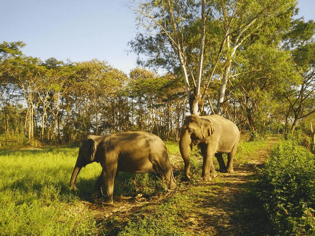 elephant valleys