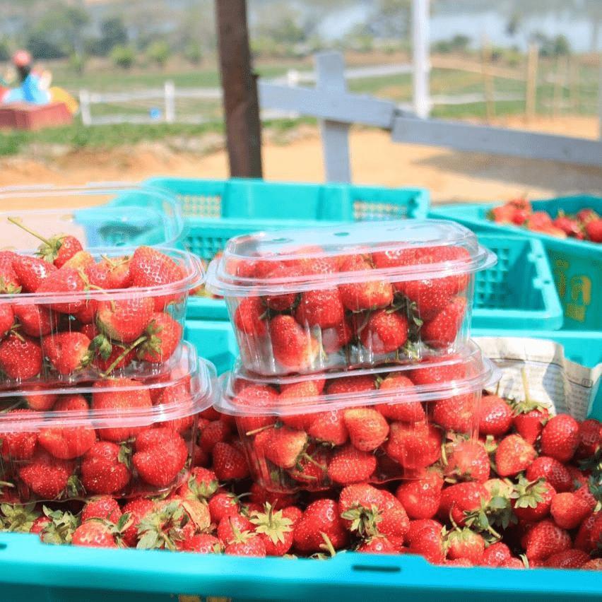 rai bao noi strawberry punnets