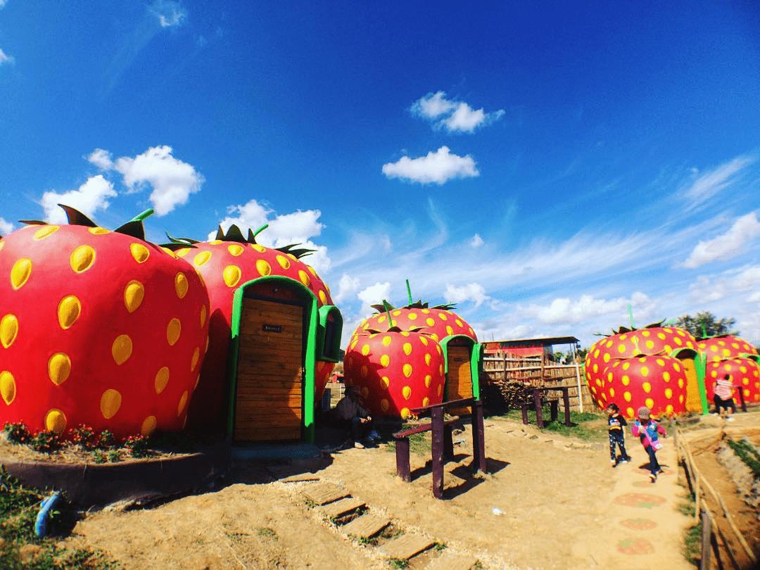 rai bao noi strawberry houses