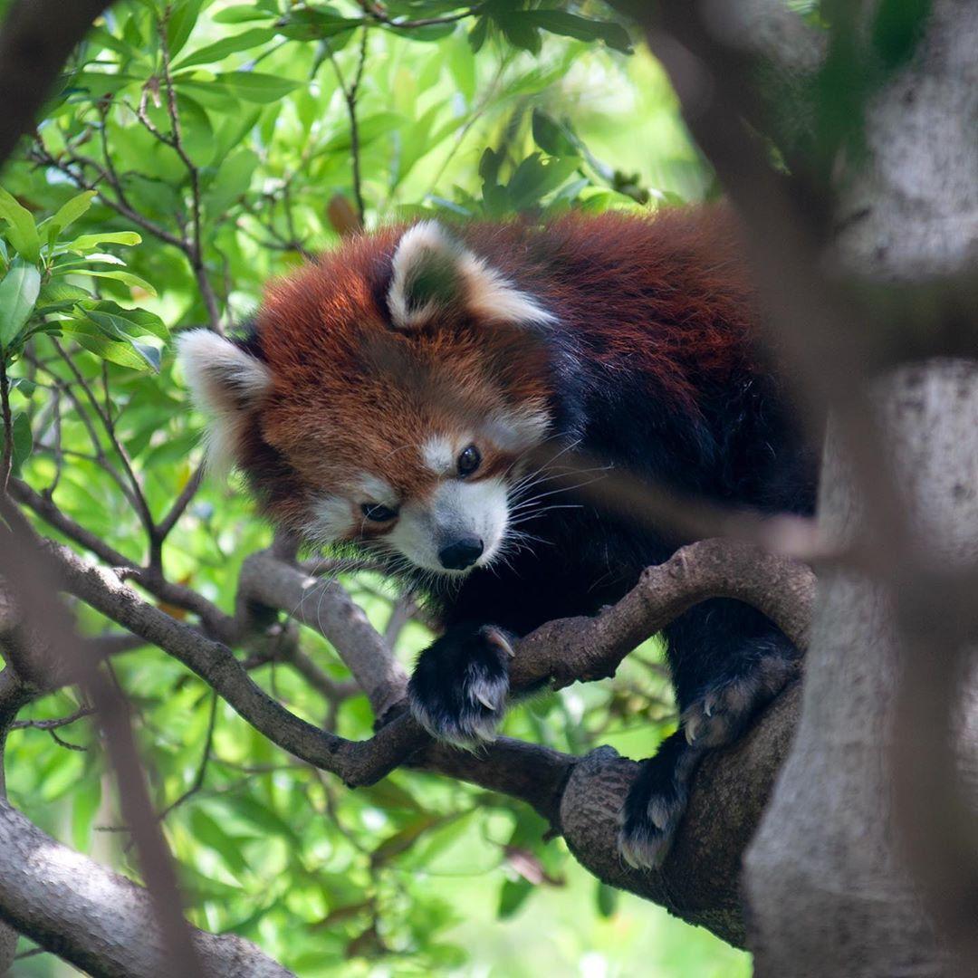 Tokyo Edogawa City Shizen Zoo