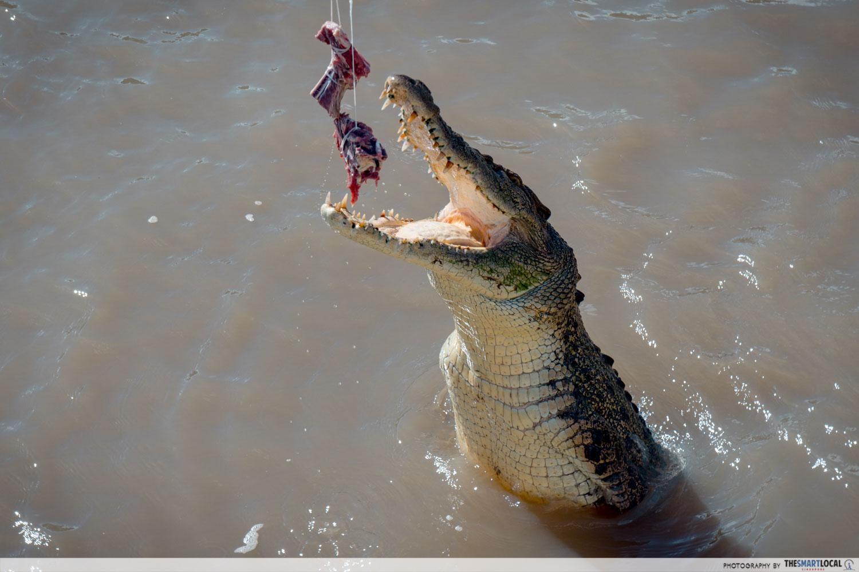 Wild crocodiles