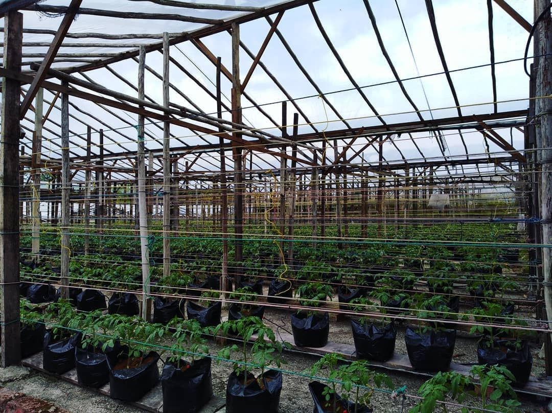 pacific agro farm singapore