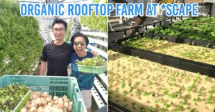 Urban farms in Singapore