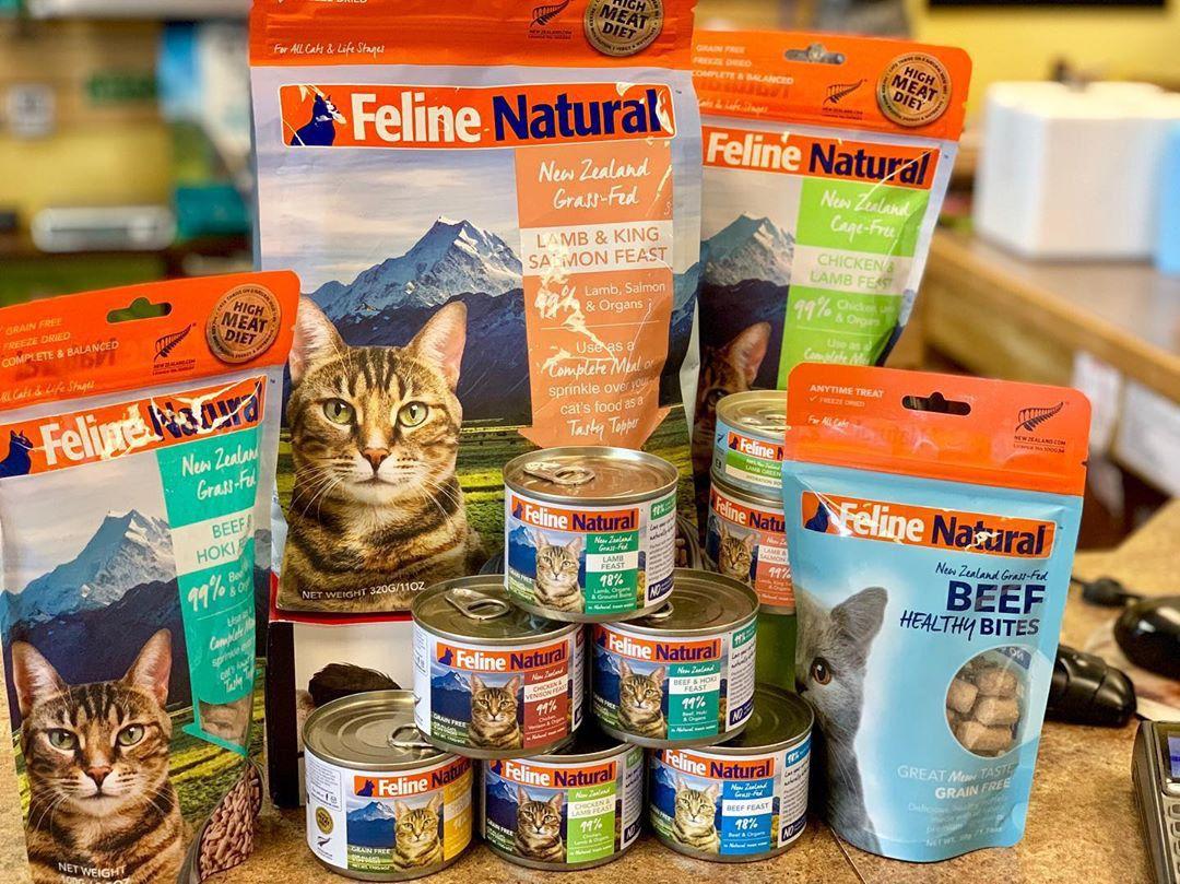 singapore cat festival food
