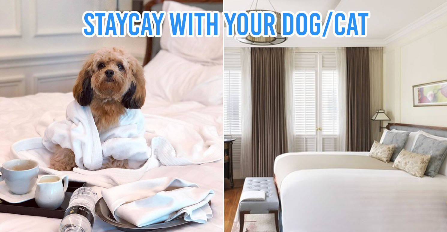 Pet Friendly Staycation Cover Image