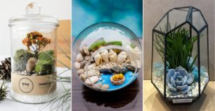 Cheap Terrariums Cover Image