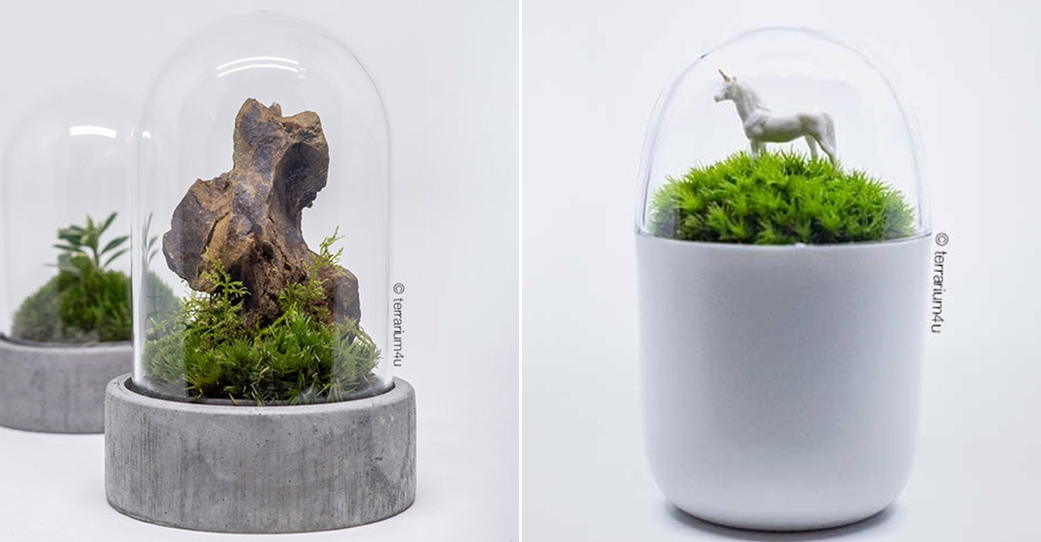 Cheap Terrariums Terrarium4u The Mini Concrete and The Beginner