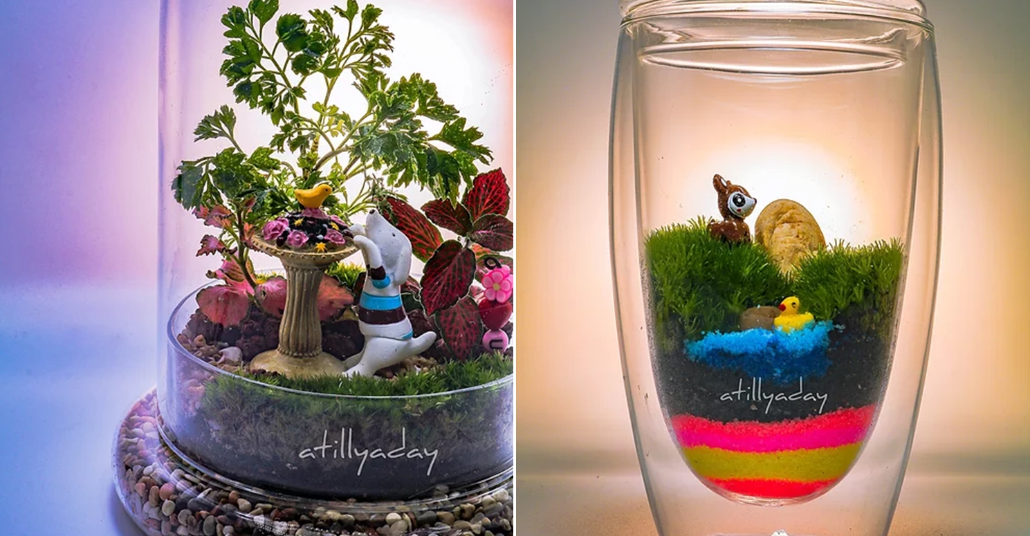 Cheap Terrariums A Tilly A Day Customised Closed Terrarium