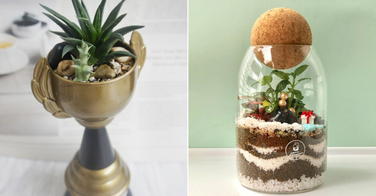 Cheap Terrariums Singapore Green Banana