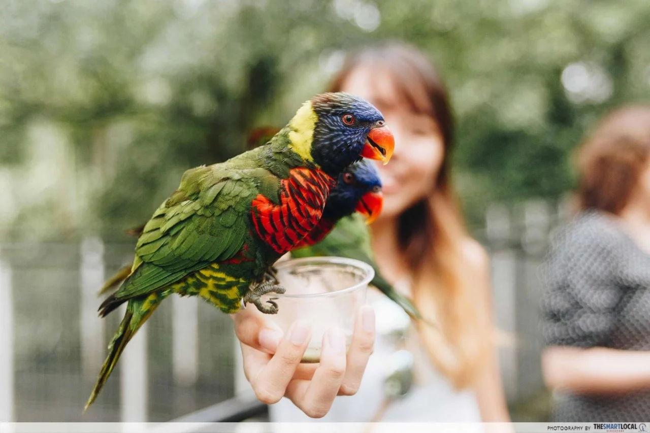 Jurong Bird Park free entry