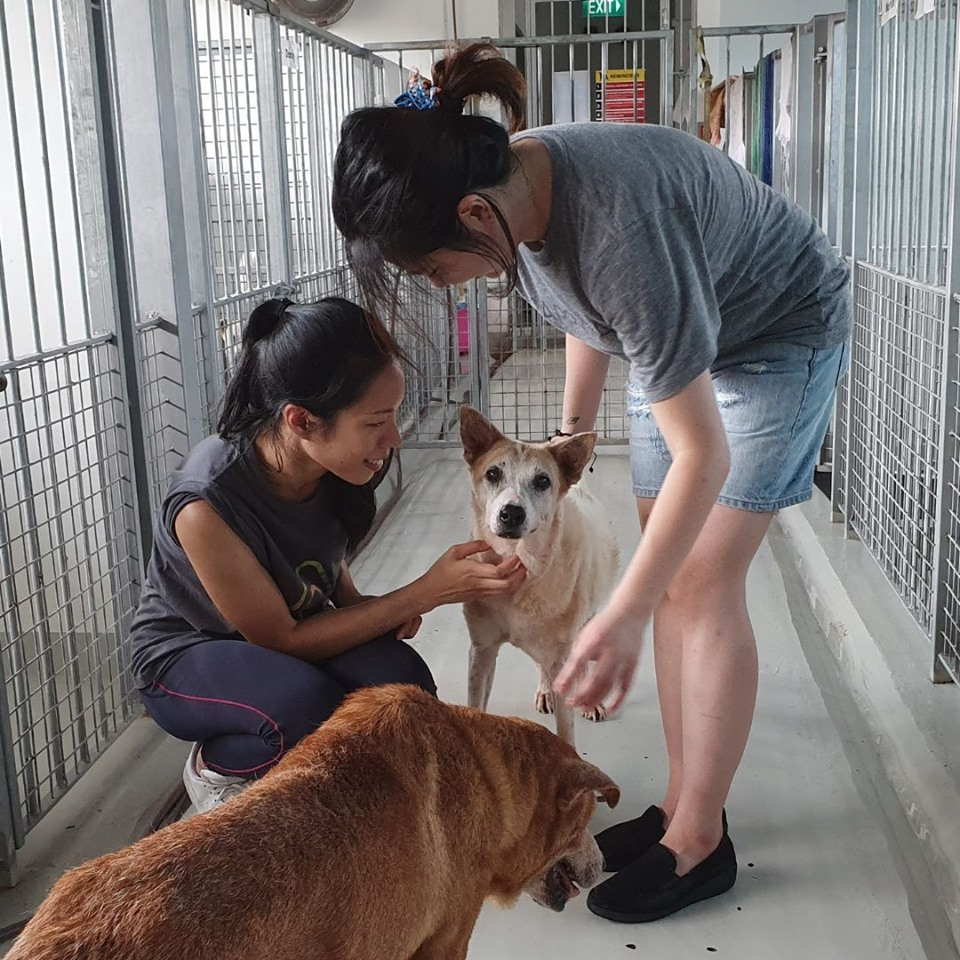 Unconventional Things To Do Singapore Animal Shelter Oasis